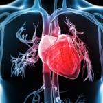 Heart Disease: Symptoms, Diagnosis, and Treatment