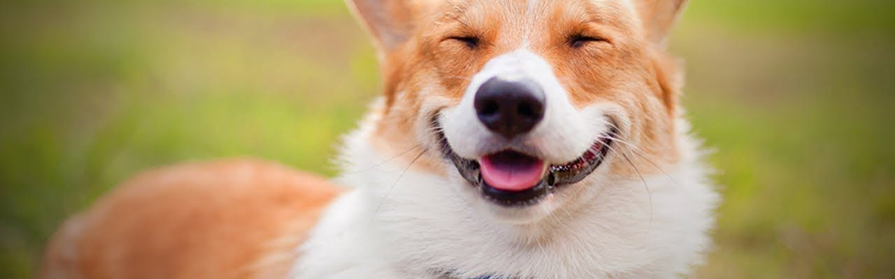 How to Strengthen My Dog's Teeth