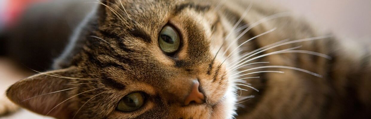 How To Tell When Your Cat Is Sick