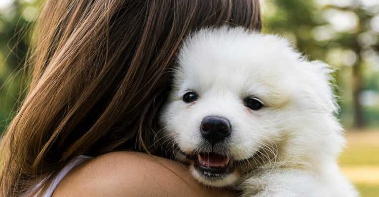 Why Do Dogs Make Great Pets?